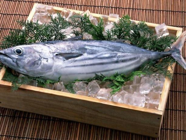 Tuunikala Kaalulangus Tervislik 2 kuu kaalulangus