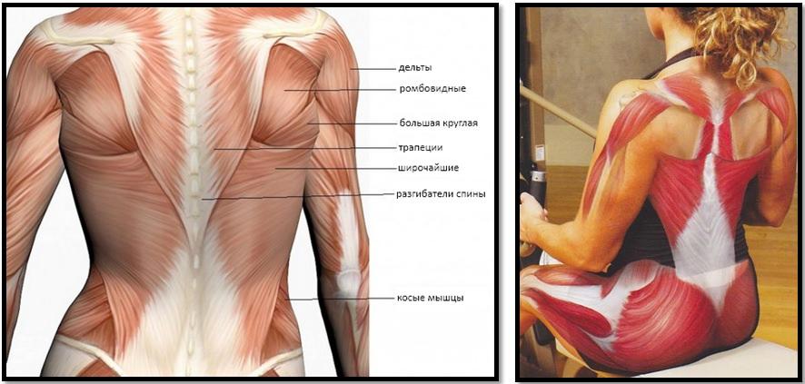 Eemaldage rasva ulemine selja Kaalulangus Tummy Tuck ja LiPO