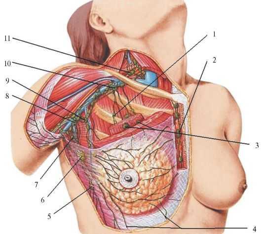 Eemaldage rindkere rasva kiiresti Kaalulanguse retseptid kiirpotiga