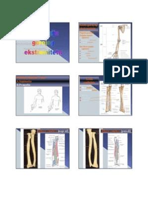 Full Body vs Jaotatud kaalulangus