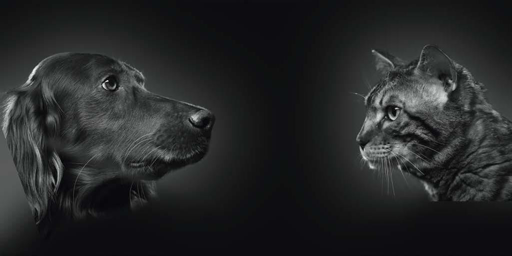 Rapid kaalulangus koer