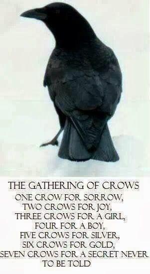 Raven kaalulangus